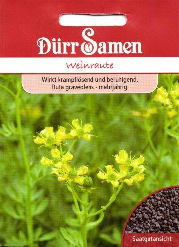 Dürr Samen 0191 Weinraute (Weinrautesamen)