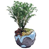 CYQ Chino Oro Creativo Maceta de cerámica Maceta de Bonsai en Maceta Hogar Planta Verde Interior Wenzhu Calamus Maceta de cerámica Tamaño (diámetro: 13,5 cm, Calibre: 10,5 cm, Altur