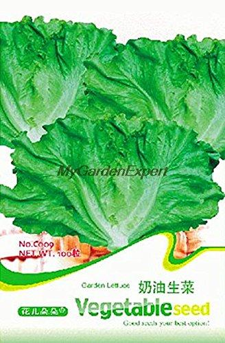 Vente chaude 100pcs Green Garden Laitue Semences, graines de légumes, Bonsai Graines, Plante en pot jardin DIY Livraison gratuite