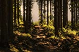 Poster Plakat Wald Wanderweg Harz M273 hochwertiger