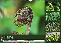 Farne - Filigrane Schoenheiten (Wandkalender 2022 DIN A3 quer): Farne - Faszinierende Pflanzen (Monatskalender, 14 Seiten )
