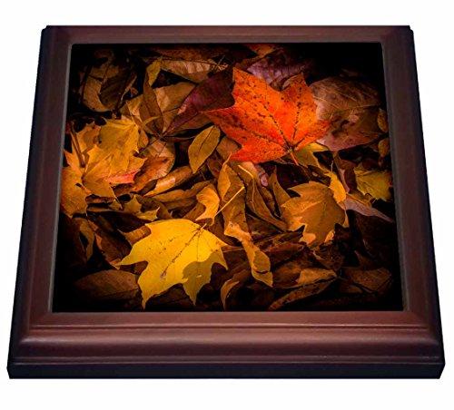 Top 10 Best Ceramic Fall Trivets Comparison