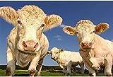 Rompecabezas de 1000 piezas para adultos, juegos de rompecabezas para rompecabezas familiares, rompecabezas de animales de vaca, 50x75cm
