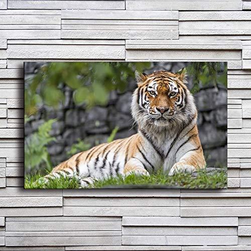 NIMCG Stampe su Tela Poster Comodino Sfondo Wall Art Animali Zoo Tigre Dipinti Decorazioni per la casa per Soggiorno Immagini 40x50 cm (Senza Cornice)
