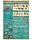 KING PRINT Betta Fish Knowledge Poster The Outer...