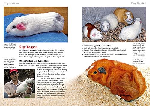 Cuys – Riesenmeerschweinchen: Cavia aperea f. porcellus (Art für Art / Kleinsäuger) - 3