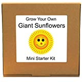 Grow Your Own Giant Sunflower Plant Kit – Unusual, Unique and Quirky Complete Beginner Friendly Indoor...