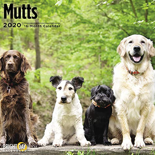 2020 Mutts Wall Calendar by Bright Day, 16 Month 12 x 12 Inch, Cute Dogs Puppy Animals