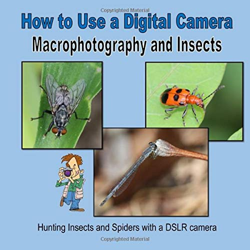 How to Use a Digital Camera - Macrophotography and Insects (Photography Guide for Beginners)