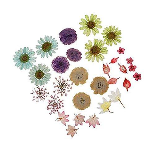 DZSW Rhldzswb 30 lotes/lotes de presionado Secos Flores y Plantas, Usado epoxi Colgantes, Collares, Manualidades, Accesorios de Bricolaje Ramo de Flores secas. (Color : Beige)