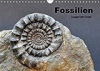 Fossilien - Zeugen der Urzeit (Wandkalender 2021 DIN A4 quer): Fossilien aus Westfalen und angrenzender Gebiete (Monatskalender, 14 Seiten )