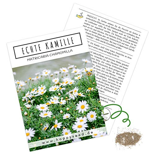 Echte Kamille Samen (Matricaria chamomilla) - Krautige, vielseitige Heilpflanze oder als Beimischung für eine bunte Blumenwiese