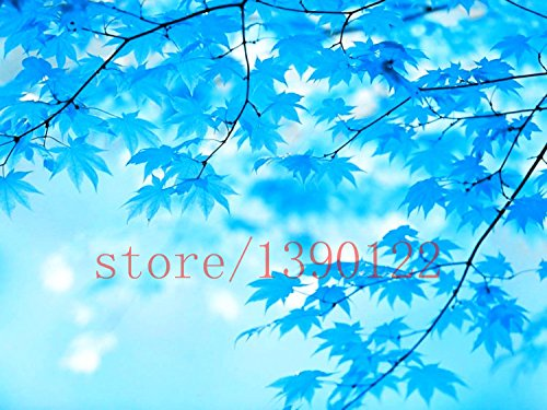 30pcs / Sac japonais Pine Tree Seeds bonsaï fleur facile à DIY plante