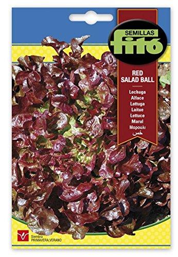 Semilla Lechuga hoja de Roble (Red Salad Ball) - Semillas Fitó