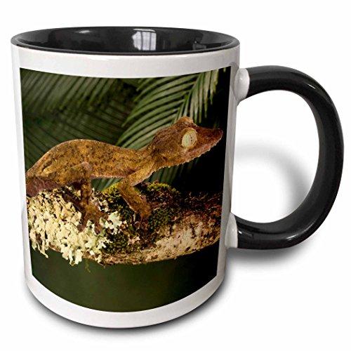3dRose eingefasst Leaf-Tail Gecko Eidechse madagascar-us39jmc0030-joe and Mary Ann McDonald-Two Ton, schwarz, Becher, Keramik, Schwarz/Weiß, 10.16cm x 7,62x-Uhr