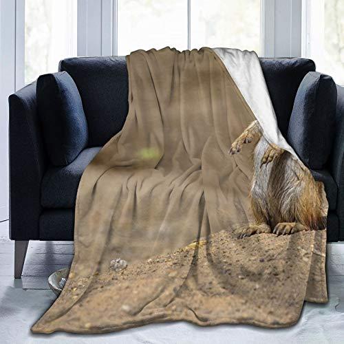 Productos coloridos Manta de forro polar de 50 x 60 pulgadas – Meerkat Naturaleza Fondo de hogar franela polar suave cálida manta de felpa para cama/sofá/oficina/camping