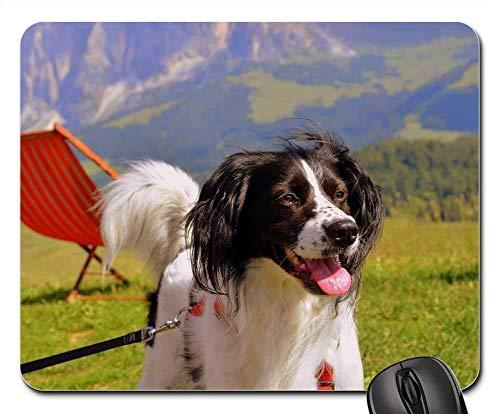 N\A Alfombrillas de ratón para Juegos, Alfombrilla para ratón, sillas de montaña Happy Dog Prato Green Clear