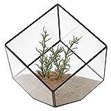 Asvert Glas Terrarium Box Cube geneigte Klarglas Pflanzer Tischplatte schwarz kleine Air Plant Halter Display Box saftige Moos Blumentopf Container (style6)