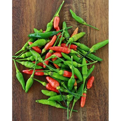 Chilli Seeds: Buy Chilli Seeds Online at Best Prices in