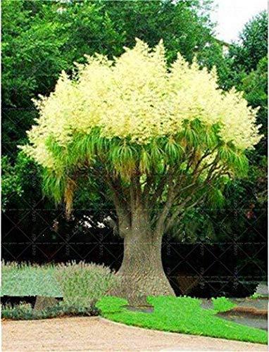 Bloom Green Co. ¡Más vendido!100Pcs / Lot Yellow Imperial Crown Bonsai imperialis Lutea Bonsai Fácil de cultivar Home Garden Ground Cover Planta: mezclar