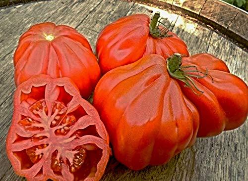 100 Samen Tomate Coeur de Boeuf, Ochsenherztomate, Oxheart Giant, NEU Nov. 2019