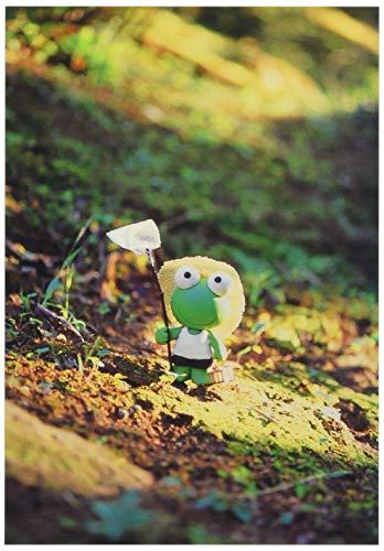 ピンナップ ポストカード 10+1枚 LP412 ケロケロくん 昆虫採集 写真 風丸 FROG イノウエヒサト