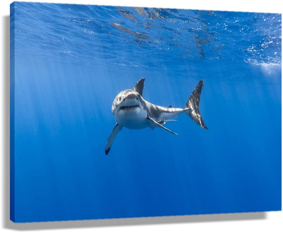 American Pyramid Gifts Excellence Great White Shark for Painting Poster Modern Li