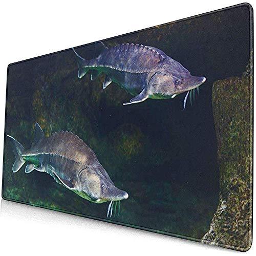 Gaming Extended Mouse Pads mit Rutschfester Gummibasis Fisch Green Atlantic Alive Sturgeon In Aquarium Weiß Beluga 30X80 cm