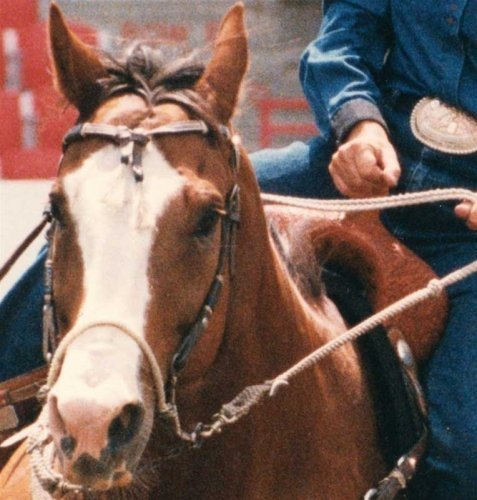 Classic Equine Bozo Sidepull Kalifornische Hackamore (Bosal) 63/4in by Classic