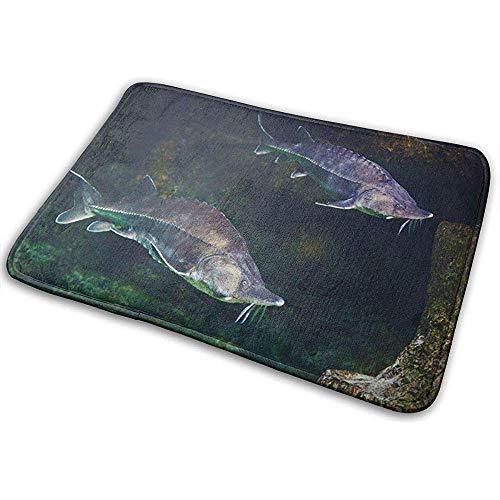 Liuqy Außerhalb Indoor Fußmatte Rutschfester Teppich Fisch Green Atlantic Alive Stör in Aquarium White Beluga 40 * 60cm