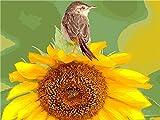 Pintura por Números DIY Acrílica Pintura Kit para Adultos y Niños Principiantes - Pintar con Numeros con 3 Pinceles y Colores Brillantes Sin Marco 40 x 50 cm Pájaro Girasol