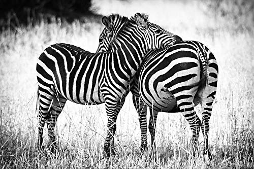 TWYYDP Puzzles Jigsaw 1000 Pezzi Bambino Amore Zebra Pittura Art Deco Domestica