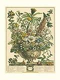 Robert Furber - Twelve Months of Flowers 1730/December Art Print 15 x 20