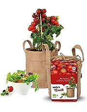 Zelfkweekset BIO tomaat 'Tiny Tim'