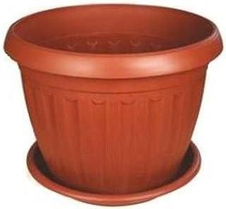 اصيص نبات خورشيد بالطبق مقاس 25 سم (3 قطع)