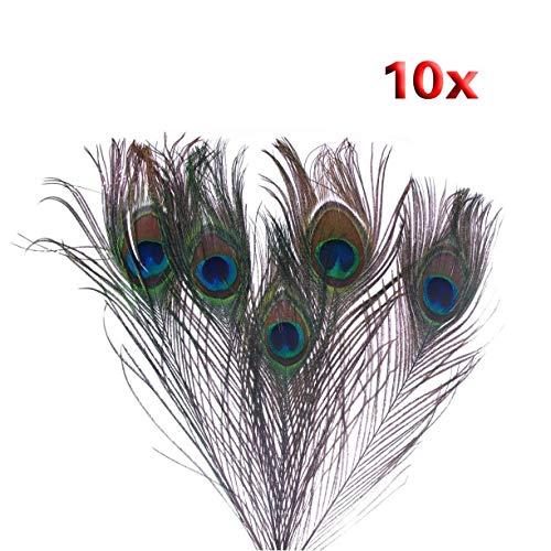 SODIAL(R) Pavone Piume di Coda 10pz x Natural Peacock Feathers - Colore Naturale