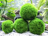 3 x 3 to 5cm Marimo MOSS BALL - Live Aquarium Aquatic Fish Tank Luffy Plant Cladophora - ammonia remover