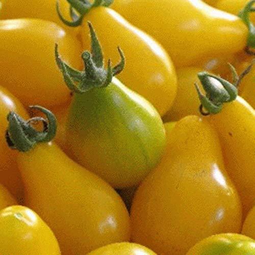 """Tomate\"""" Pearl yellow\"""" - 50 Samen -außergewöhnliche Tomate !"""