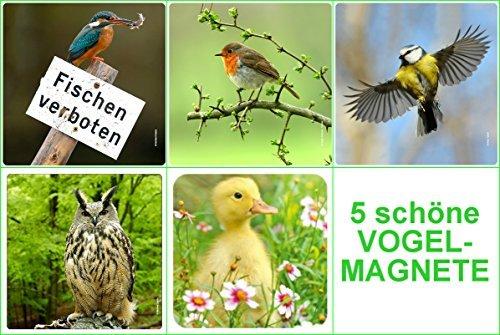 Edition colibri jeu de 5 oiseaux : oiseaux indigènes : martin-pêcheur-aimants-rouge-gorge, modèle aM/63 caneton chouette (uHU) \