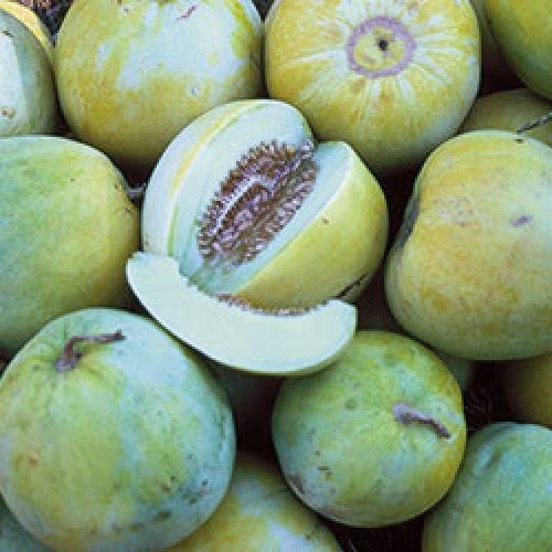 ungarische kleine Apfelmelone, extra süsses Aroma, 90 Tage, 10 Samen, von unserer ungarischen Farm samenfest, nur organische Dünger, KEINE Pesztizide, BIO hu-öko-01