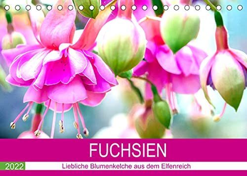 Fuchsien. Liebliche Blumenkelche aus dem Elfenreich (Tischkalender 2022 DIN A5 quer): Die anmutige Schönheit der farbenfrohen Kelche in ungewöhnlich ... 14 Seiten ) (CALVENDO Hobbys)