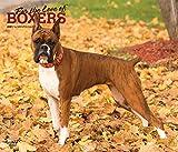 Boxers – For the love of Boxer 2021 - 16-Monatskalender mit freier DogDays-App: Original BrownTrout-Kalender - Deluxe [Mehrsprachig] [Kalender] (Deluxe-Kalender)