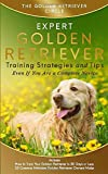 Golden Retriever: Expert Golden Retriever Training Strategies and Tips, Even If You Are a Complete Novice