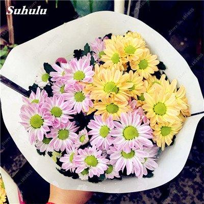 Grosses soldes! 50 Pcs Daisy Graines de fleurs crème glacée parfum de fleurs en pot Chrysanthemum jardin Décoration Bonsai Graines de fleurs 18