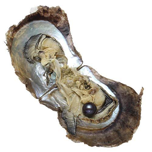 Akoya Zuchtperlen, Austern mit Perlen im Inneren, Süßwasser-Zuchtperle, Austern-Perlen, Austern-Perlen, Austern-Jahrestag-Dekoration für Frauen (9–10 mm), Perle, Schwarz