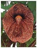 80 semi per porzione Cresce in ambienti chiusi è possibile durante tutto l'anno. Quattro semi di colore carta in formato cartolina con illustrazione di colore Con istruzioni per la coltivazione e la cura estese.