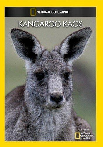 Kangaroo Kaos [Edizione: Stati Uniti]