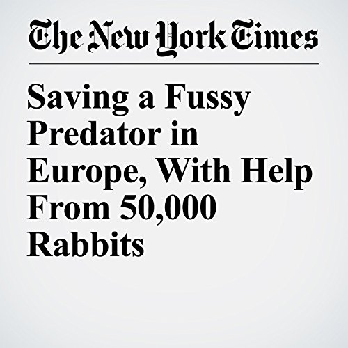 Saving a Fussy Predator in Europe, With Help From 50,000 Rabbits copertina