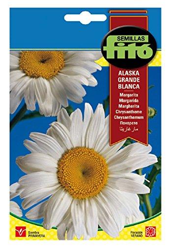 Semillas Fitó 577 - Semillas de Margarita Grande de Alaska Blanca
