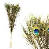 Inter Flowers GmbH 10 plumas de pavo real auténticas, aprox. 90 – 100 cm, plumas de pavo real, accesorio para carnaval